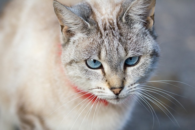 Intense blik kat